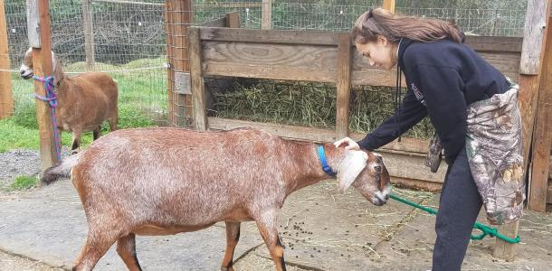 Sophomore Nikki Ferreira pets a goat during monthly visit to a local non-profit
